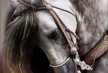Csodállatos lovak