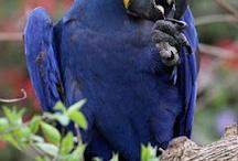 pix - birds / by Eileen Frey