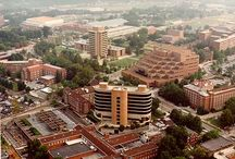 University of Tennessee / by Cindy White