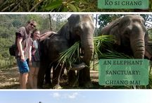 Thailand / This board includes where to stay, what to eat, and what to do in Thailand.