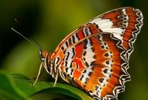 Butterflies & Moths / Best photos of #butterflies and #moths