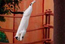 ...jumping...