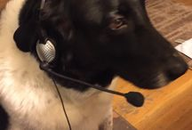 Pets in Headsets