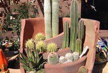 Terrario cactus