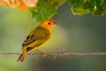 Aves / by Cristy Carmona