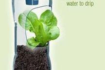 criar uma horta