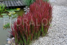 Garden - grasses / The most beautiful and creative ideas including grasses.