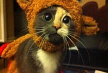 >^,,^< Animal Funnies