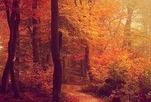 Season // Fall