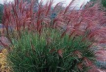 Gräsformationer