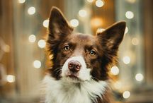 dog photography Inspiration