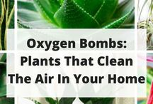 plants cleaning air in home