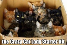 Cat Woman Obsessions