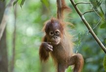 Stop palm oil deforestation