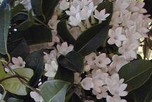 květiny - katalog