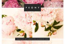 Peonies- my fav flower