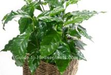 plantepleje