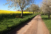 Shropshire / Cherry tree walk May 2015