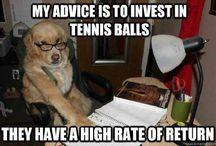 Funny Finance!
