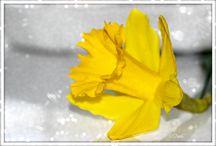 Kevät 2014 / Kukkia, pääsiäinen, kynttilöitä, aamukahvi, aamupala, aamiainen, hyvää yötä. spring, easter, good morning, flowers, candles, morning coffee, breakfast, breakfast, good night, April
