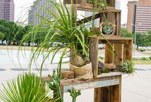 Oasis, jardín