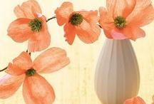 Flowers / Art&Craft
