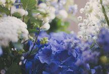fleur bleus