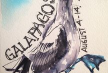 Galapagos Sketches / A trip to wild places. Coming soon: a wonderful book of prose, poetry, sketches and photography.