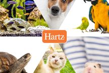 Friday Face / Share a photo of your pet for a chance to win Hartz products!  All pets are welcome!  Dogs, cats, gerbils, fish, reptiles, etc.