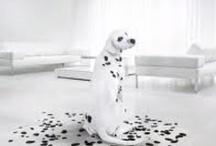 black & white  / by Sharon