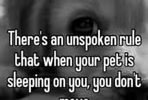 **ANIMALS** / ... the ones that bring tears to my eyes.