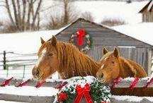 Horse natale