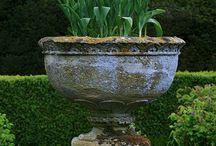 кадки растения