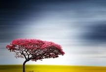 Inspiring Photo Art