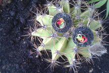 Latoupi Cactus Earrings / Stylish & minimal!