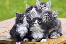 Кошки / Кошки,большие и маленькие