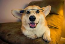 Tips For Dog Owners / Pet care intel from our blog and around the web.