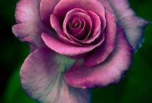 Virágok (flowers)