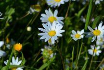 My photos ...Flowers / Flowers