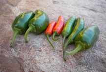 Hot Pepper Oil and Jelly Making / by Laina Tallerico