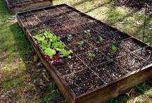 garden & the backyard
