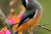 fauna BIRD