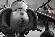 Harrier!