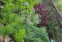 My-rustic-garden