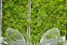 love moss