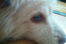 내 강아지