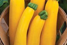 North America: Vegetables / Squash, Pumpkin, Sweet Potato