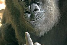 Ojo - Monkeys / Photos and references of Monkeys