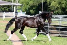 Horses classes