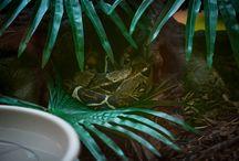 Amazonas & Kongo 2014 / Ausstellung im Emmen Center. http://www.shopping-erleben.ch/blog/macht-der-amazonas-das-rennen